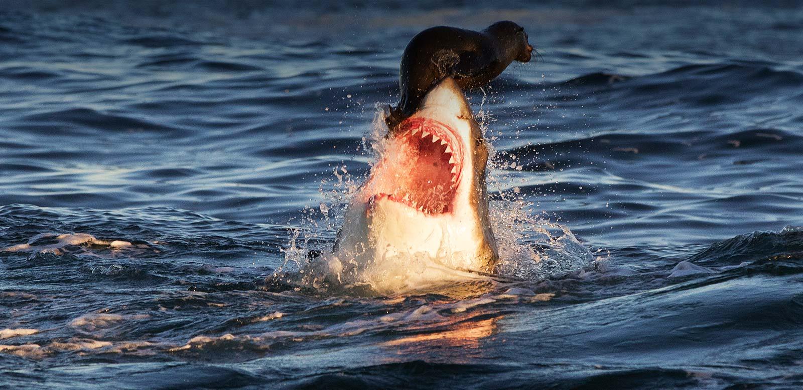 shark-cage-diving-mossel-bay-banner