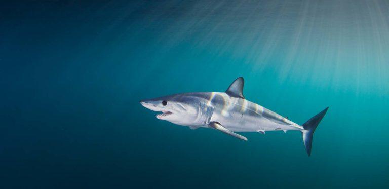 shark-week-in-south-africa-banner