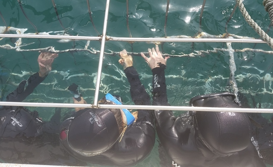 Shark Cage Divers